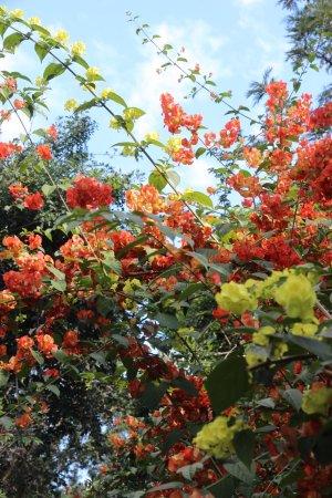 Saint-Gilles-les Hauts, Reunion: un petit écart dans le parc permet de forts belles rencontres florales