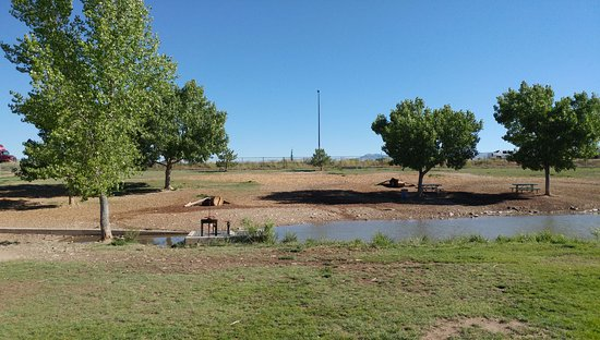 Canyon View Park: Dog park pond - the retrievers love going in the water!