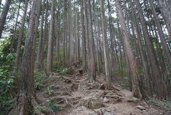 Kanto, Japan: photo4.jpg