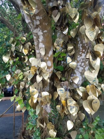 Chalong, Thailand: The trees had so many wishes and blessings hanging from them
