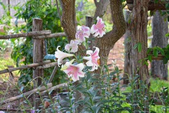 Das Garten Haus Bed and Breakfast: May gardens at Das Garten Haus