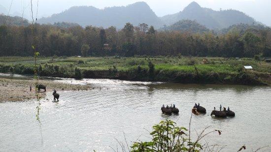 Ban Xieng Lom, Laos: Elephants crossing the river
