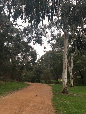 Burwood, Австралия: Gardiner Creek Reserve