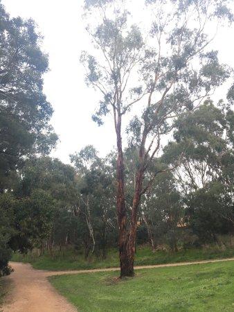 Burwood, Australien: Gardiner Creek Reserve