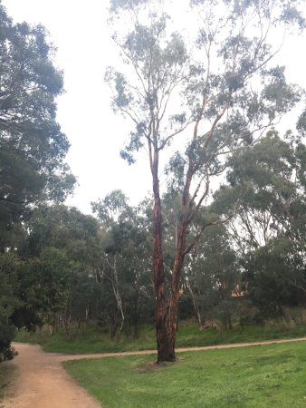 Burwood, Australia: Gardiner Creek Reserve