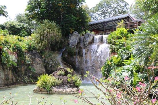 Десе, Гваделупа: des plantes, des arbres...