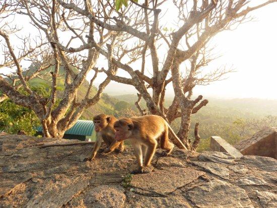 Dambulla, Sri Lanka: exteriores de las cuevas