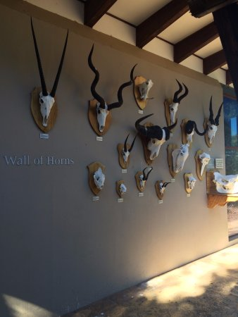 Addo Elephant National Park, Sydafrika: Wall of horns