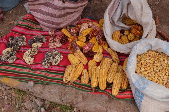 Chinchero, Pérou : il mais