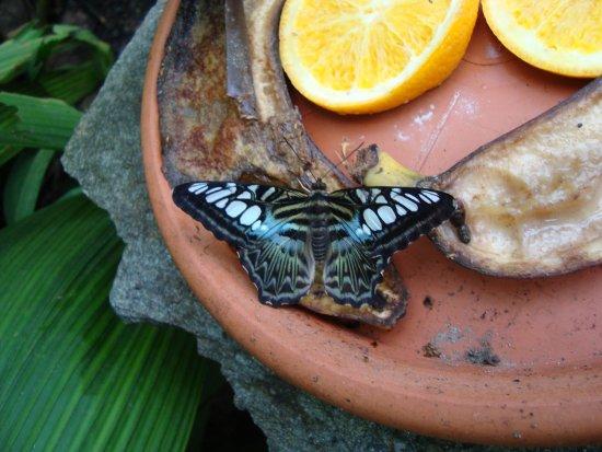 Kerzers, Zwitserland: Papiliorama