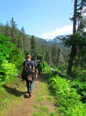 Otter Cove Resort: Our cabins have direct access to the trail system in Kachemak Bay State Park
