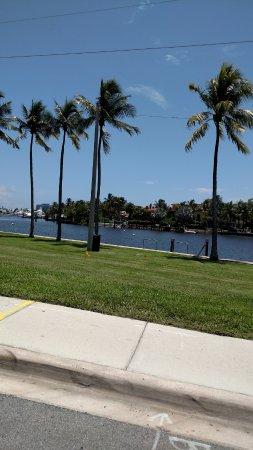 Fort Lauderdale Beach: Palms