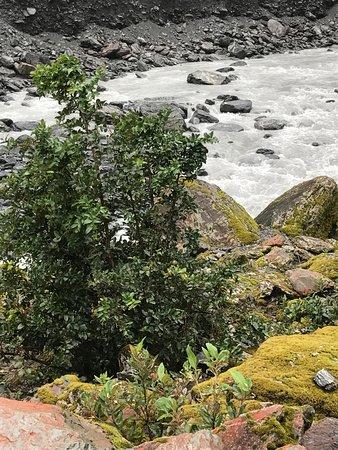 Франц-Иосиф, Новая Зеландия: pretty picture