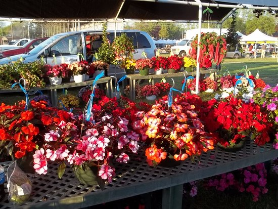 Cedarburg, WI: Selling blooming plants.  Located north of the grandstand along the fence.