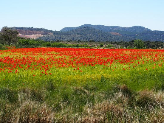 Province of Valencia, İspanya: Mohnblumen bei Alpuente