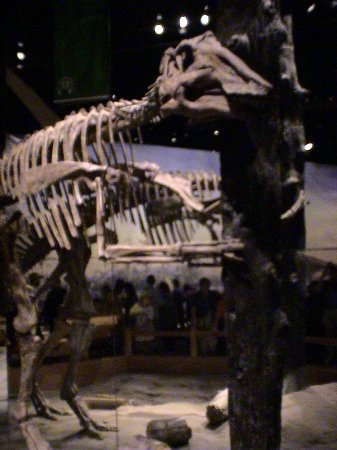 Royal Tyrrell Museum of Palaeontology: Where am I?