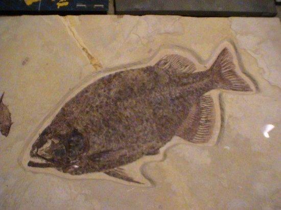 Royal Tyrrell Museum of Palaeontology: A fish fossil