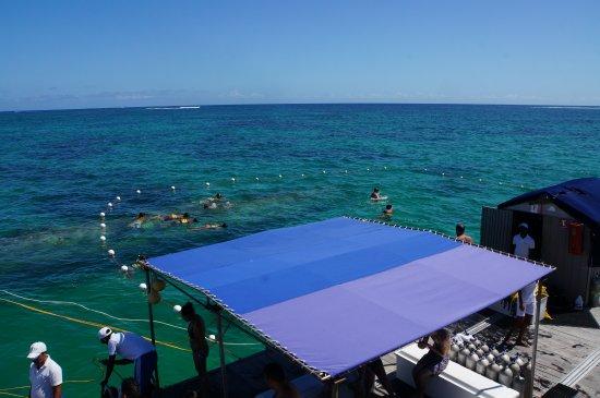 Seaquarium Punta Cana : загон для антисноркелинга