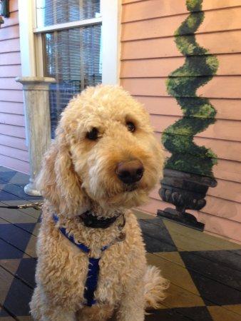 Shelbyville, KY: Dog approved