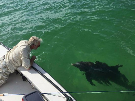 Gulf Breeze, FL: Capt. JACK speaks Dolphin.... Daily