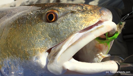 Gulf Breeze, FL: Redfish On the Fly ~ Capt. Jack will put you on these fish