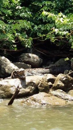 Cañón del Sumidero: cocodrilo