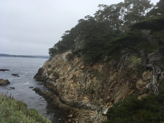 Point Lobos State Reserve: photo5.jpg