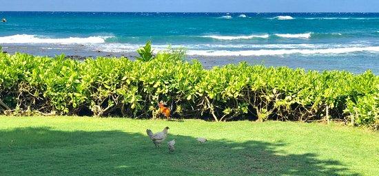 Koa Kea Hotel & Resort: photo0.jpg