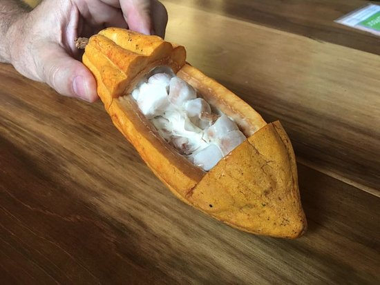 El Quetzal de Mindo Chocolate Tour: Cacao
