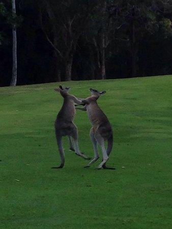 Nelson Bay, Αυστραλία: photo1.jpg