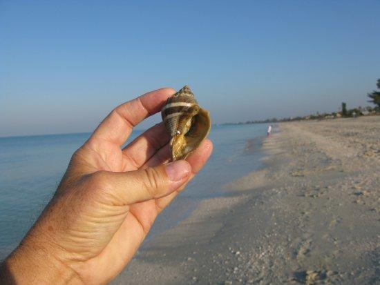 Nokomis, FL: Great quiet beach just outside your door.