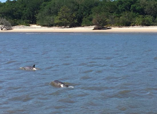 Fernandina Beach, FL: What an experience to see so many dolphins for such a long time