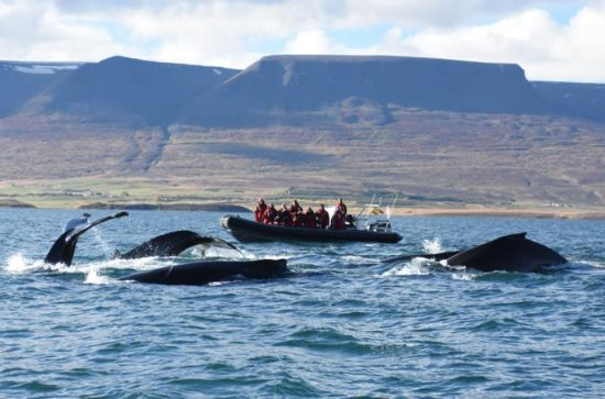 Small-Group Whale Watching from...