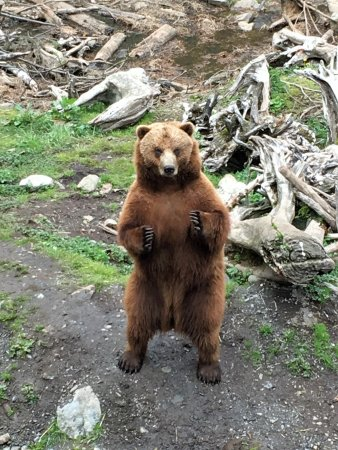 Sitka, Αλάσκα: Baloo's sister Toby