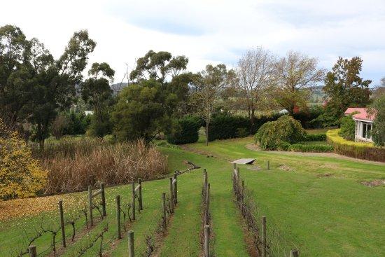 Yarra Glen, Australia: Pond