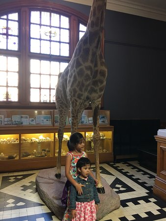 Durban Natural Science Museum Price