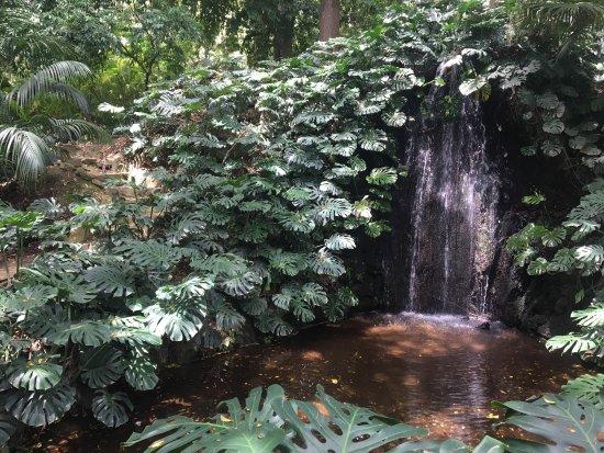 La concepcion jardin botanico historico de malaga for Bodas jardin botanico malaga