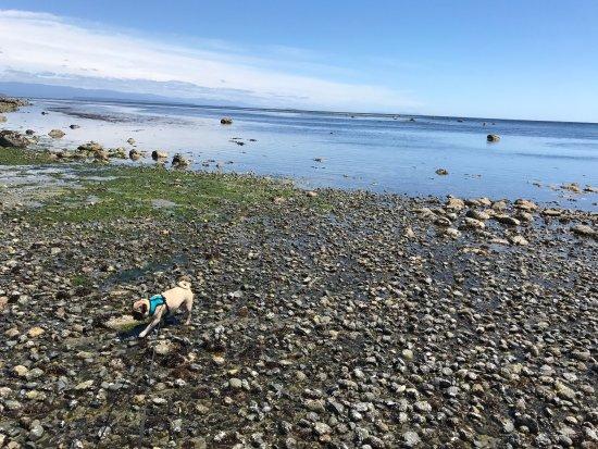 Quathiaski Cove, Canadá: photo1.jpg