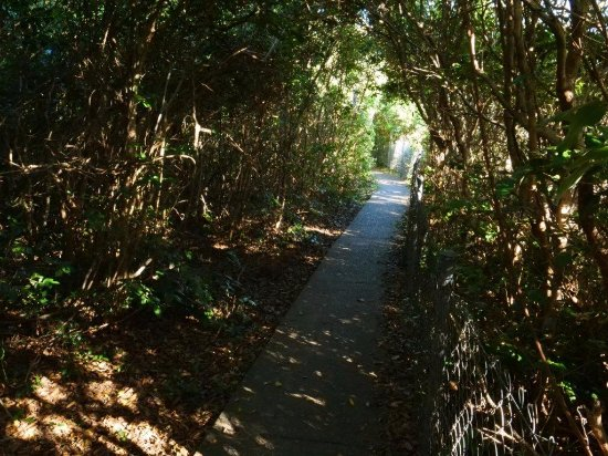 Forster, Australia: Cliff top pathway is well constructed