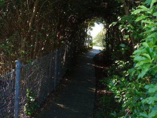 Forster, Australia: Concrete path along cliff tops from Bennett's Head