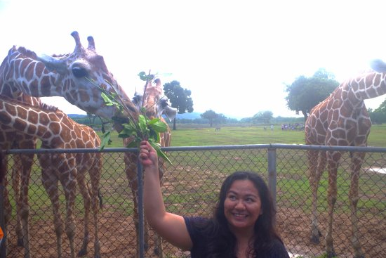 Busuanga Island, Φιλιππίνες: Giraffe Feeding