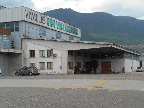 Cantina Vivallis S.C.A