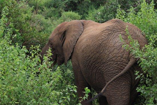 Lake Manyara National Park, Tanzania: African Elephant