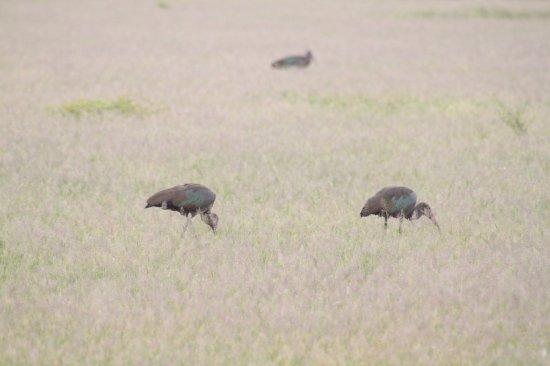 Lake Manyara National Park, Tanzania: Birds