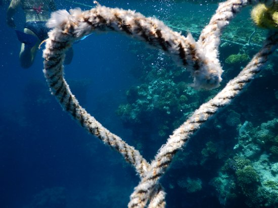 Sha'ab Marsa Alam : I do love dolphins