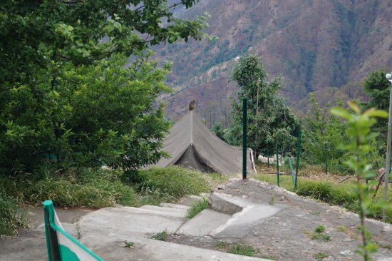 Camp Wildex, Kanatal Photo