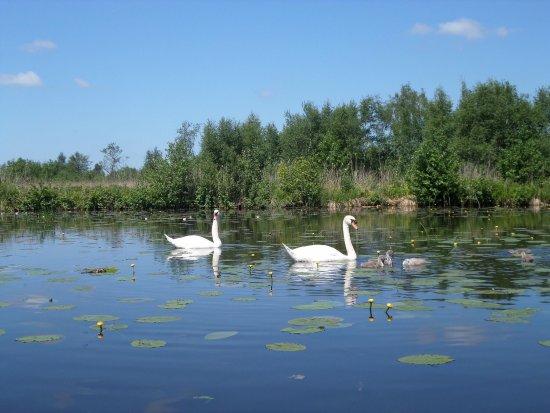 Provincia de Overijssel, Países Bajos: photo4.jpg