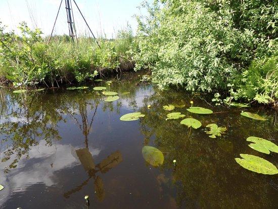 Provincia de Overijssel, Países Bajos: photo6.jpg