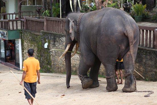 Hotel Elephant Park: ...