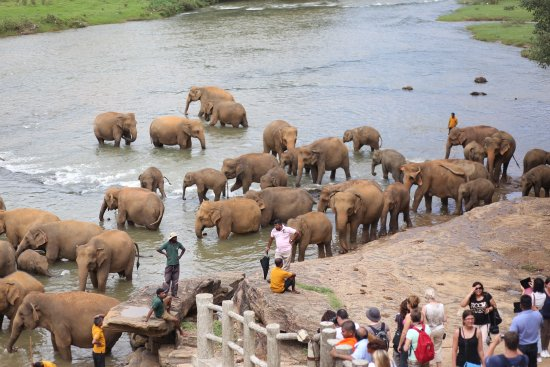Hotel Elephant Park: //